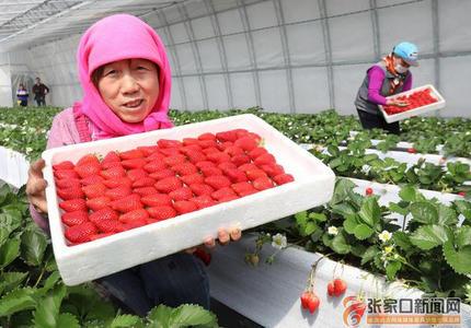 扶贫草莓园助农民增收