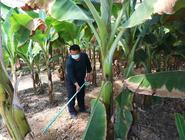 張家口萬全:特色種植助農增收