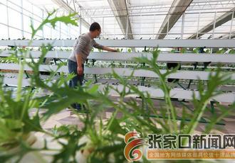 特色種植助農增收