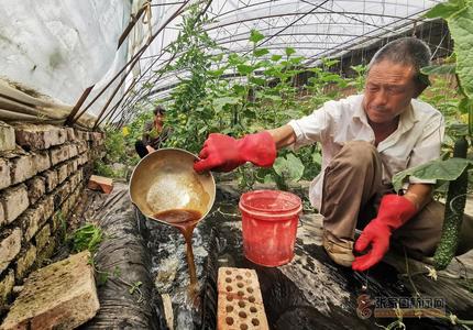 張家口橋東:雙廟蔬菜走俏張宣