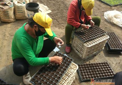 郝常珍帶著專家團回鄉免費培訓鄉親種菜