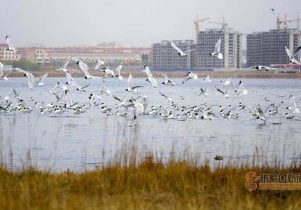 河北张家口——湿地鸟翔集 生态家园美