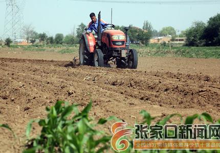 開展特色種植 促進農民增收