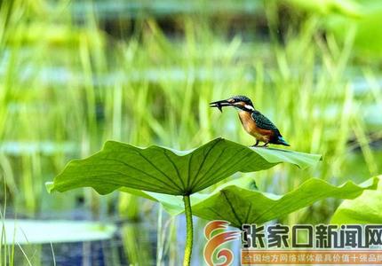 湿地盛夏水鸟翔集