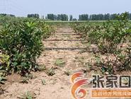 [走向我们的小康生活]第七屯村:种下黑果花楸 酿造甜蜜生活