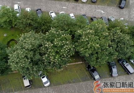 張家口宣化:綠色停車場  城市新景觀