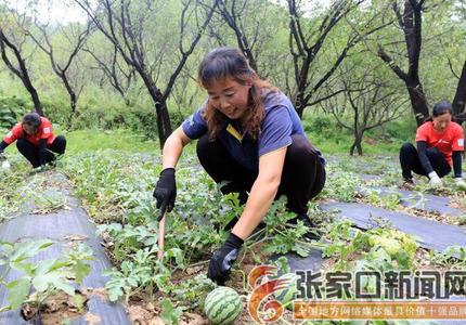 林下经济助农增收
