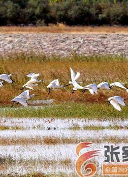 深秋湿地飞鸟翔集