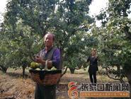 孙桂武:承包梨园过上香飘飘的日子