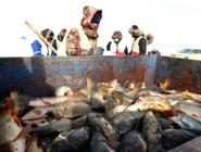 漁獵:沸騰冰雪庫倫淖爾湖