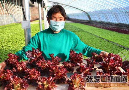 水培蔬菜大棚助农增收