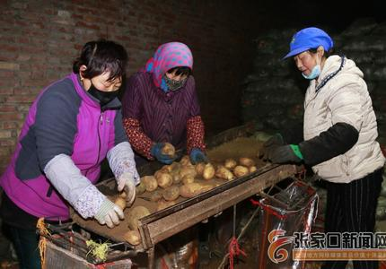 张家口市察北管理区:开启马铃薯备播模式