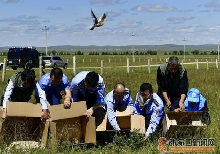 完成野化训练 达到放归条件 33只蒙古百灵放飞大自然