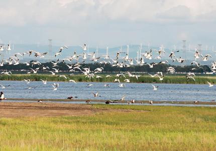 秋高气爽 候鸟翔集 快来一起到张家口罗平湖畔来看鸟
